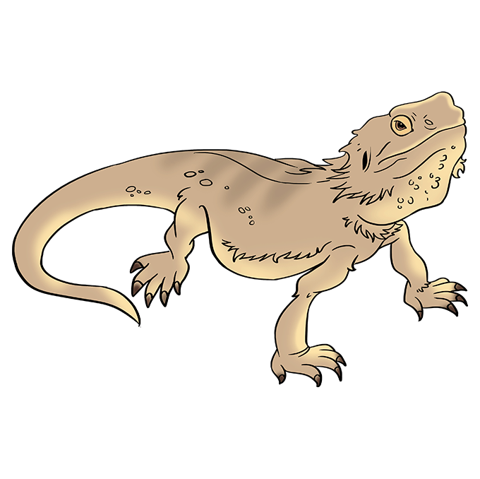 How to Draw Bearded Dragon Lizard: Step 10