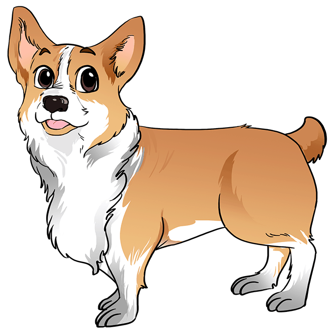 How to Draw Corgi: Step 10