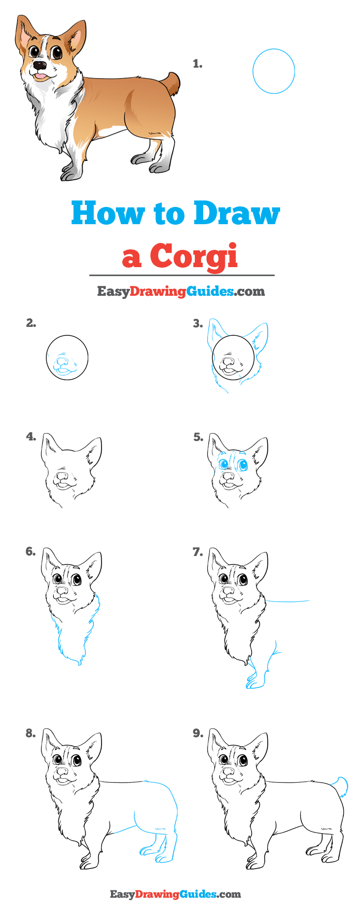 How to Draw Corgi