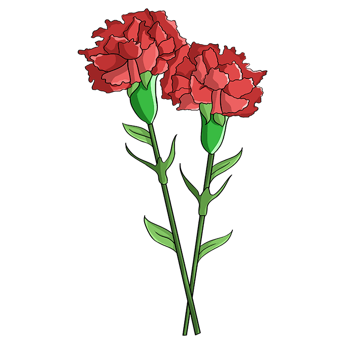 How to Draw Carnation: Step 10