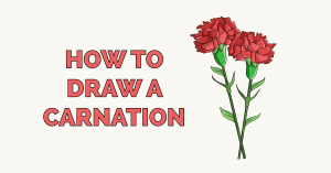 How to Draw a Carnation Featured Image