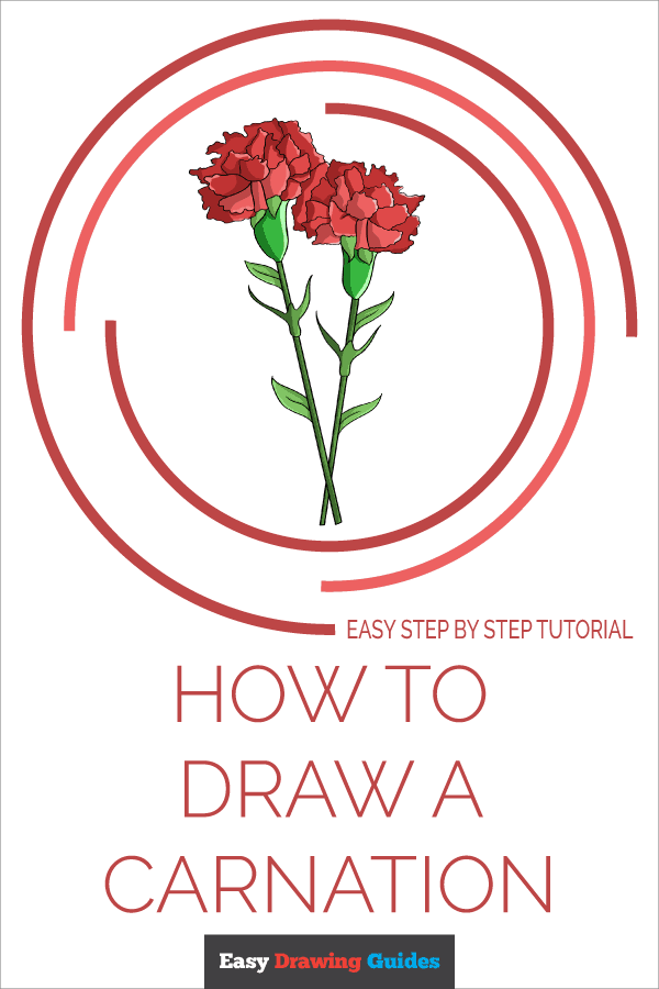 How to Draw Carnation | Share to Pinterest
