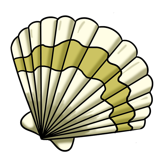 How to Draw Seashell: Step 10