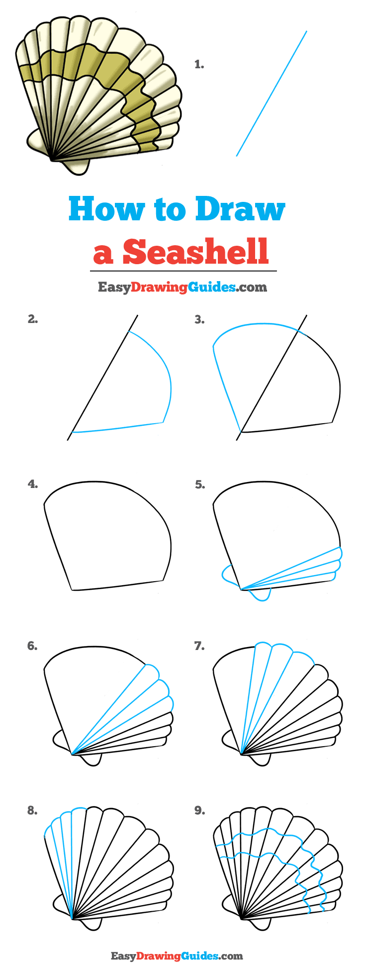 How to Draw a Seashell Step by Step Tutorial Image