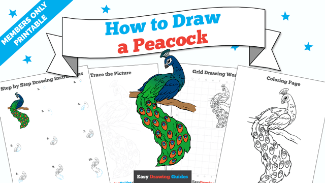 download a printable PDF of Peacock drawing tutorial