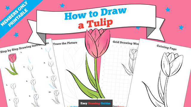 download a printable PDF of Tulip drawing tutorial