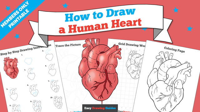 download a printable PDF of Human Heart drawing tutorial