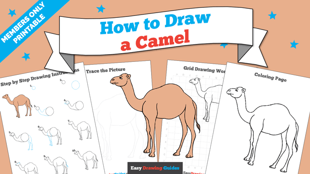 download a printable PDF of Camel drawing tutorial
