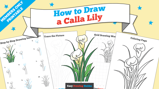 download a printable PDF of Calla Lily drawing tutorial