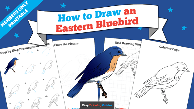 download a printable PDF of Eastern Bluebird drawing tutorial
