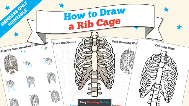download a printable PDF of Rib Cage drawing tutorial