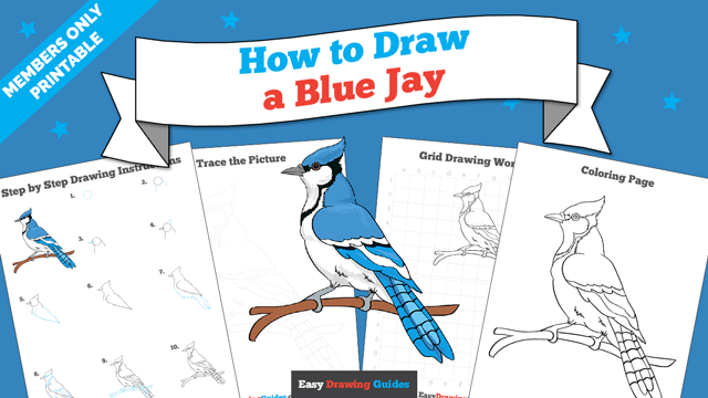 Printables thumbnail: How to draw a Blue Jay