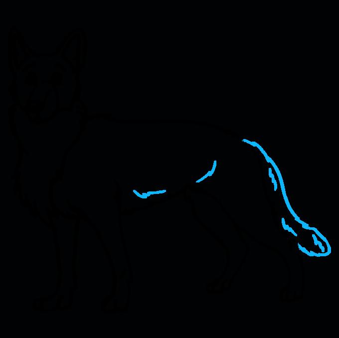 How to Draw German Shepherd: Step 9