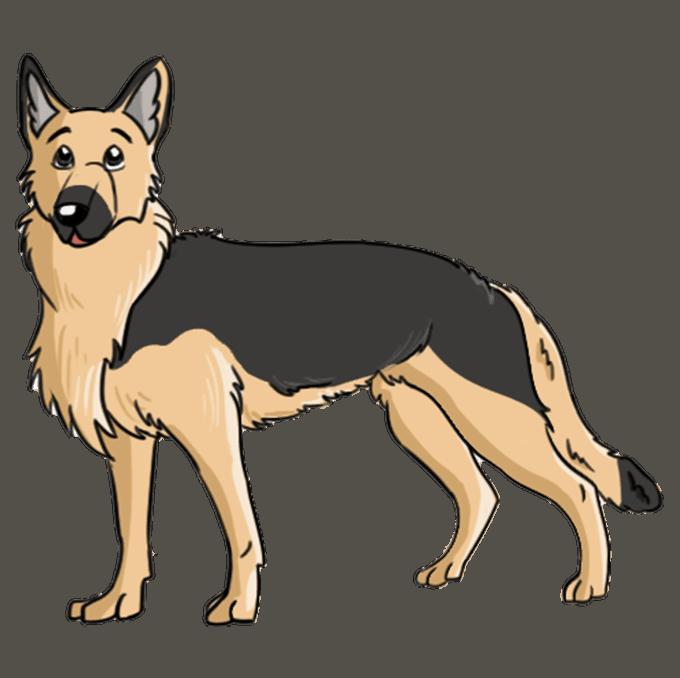 How to Draw German Shepherd: Step 10