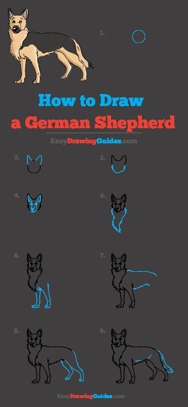 How to Draw German Shepherd