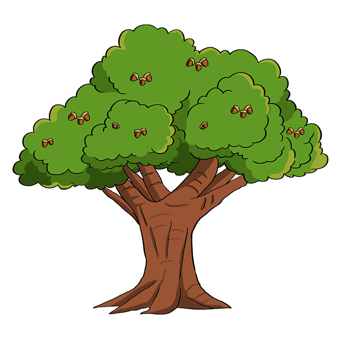 How to Draw Oak Tree: Step 10