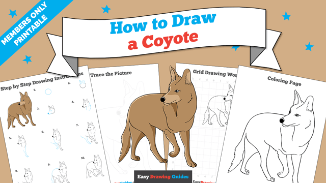download a printable PDF of Coyote drawing tutorial