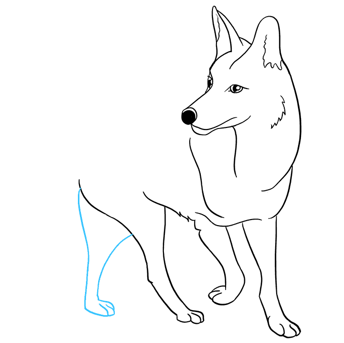 How to Draw Coyote: Step 8