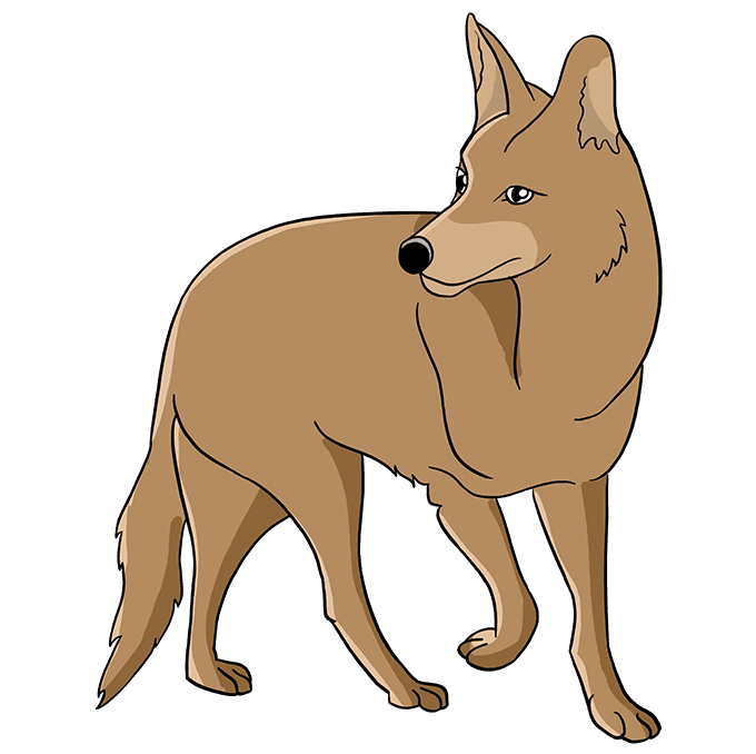 How to Draw Coyote: Step 10