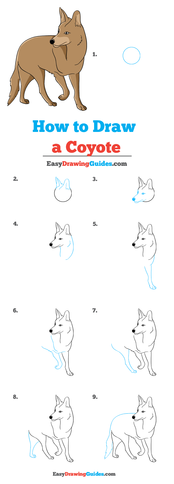 How to Draw Coyote
