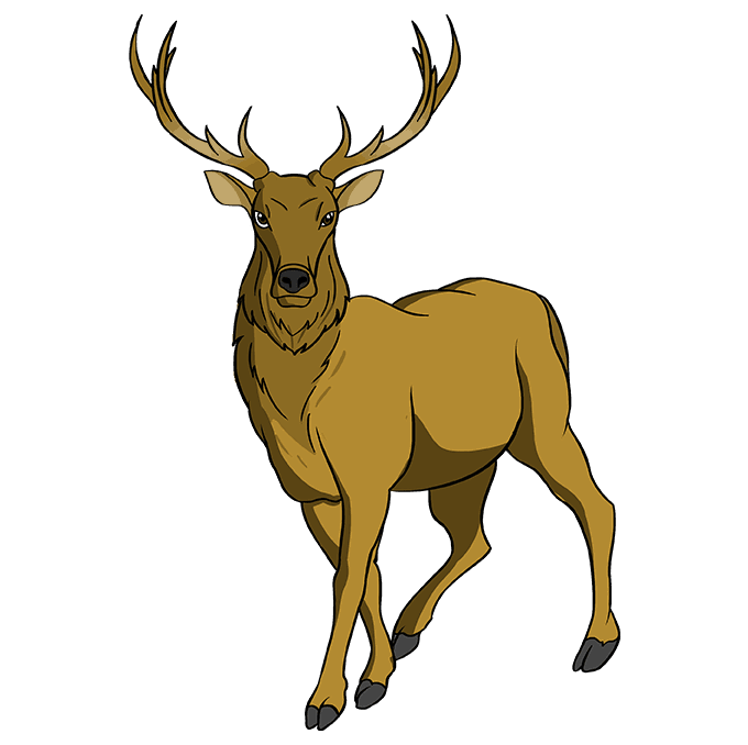 How to Draw Elk: Step 10