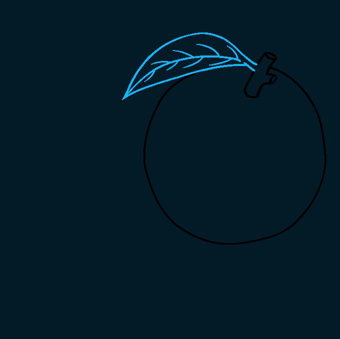 How to Draw Orange: Step 3