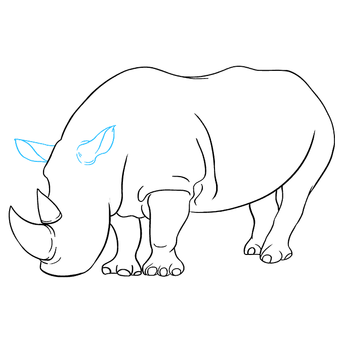 How to Draw Rhino: Step 8