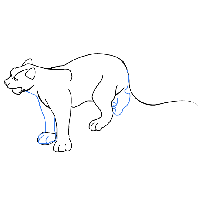 How to Draw a Snow Leopard Step 08