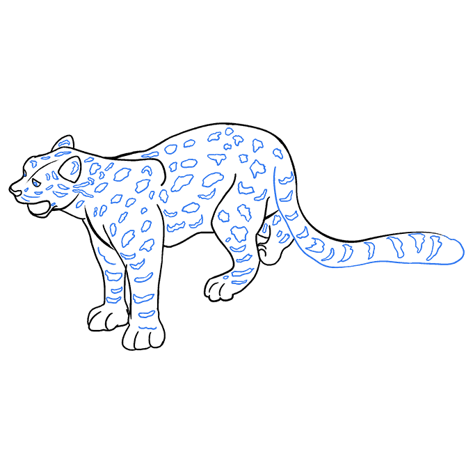 How to Draw a Snow Leopard Step 09