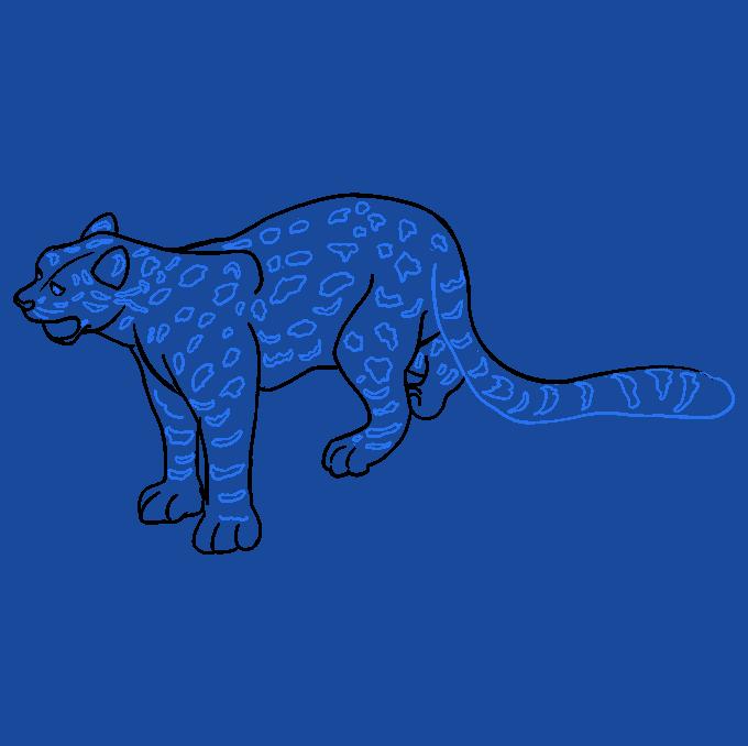 How to Draw Snow Leopard: Step 9