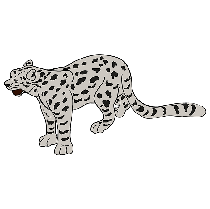 How to Draw a Snow Leopard Step 10
