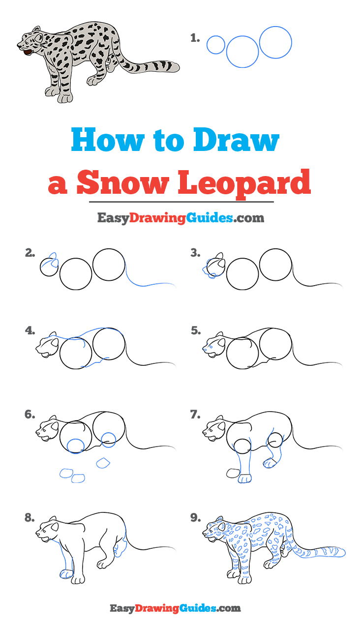 How to Draw a Snow Leopard Step by Step Tutorial Image
