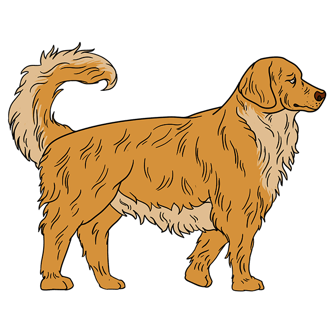 How to Draw a Golden Retriever Step 10
