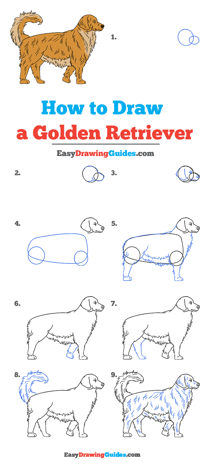 How to Draw a Golden Retriever Step by Step Tutorial Image