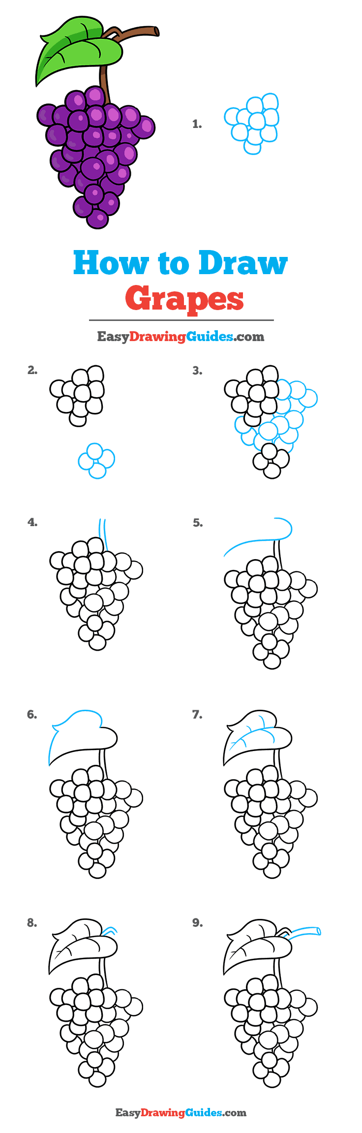 How to Draw Grapes Step by Step Tutorial Image