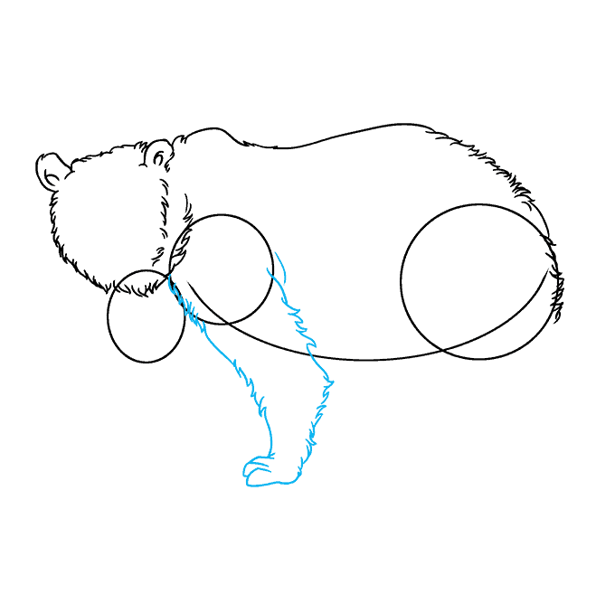How to Draw Grizzly Bear: Step 4