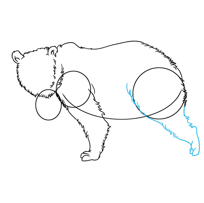 How to Draw Grizzly Bear: Step 5
