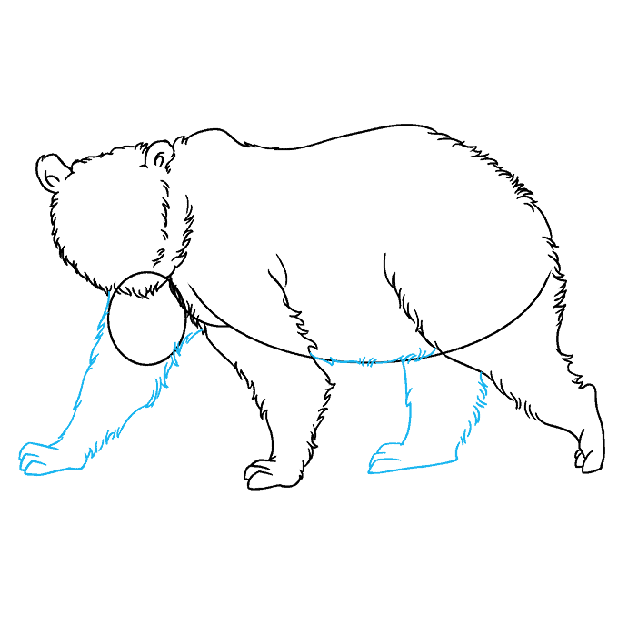 How to Draw Grizzly Bear: Step 6