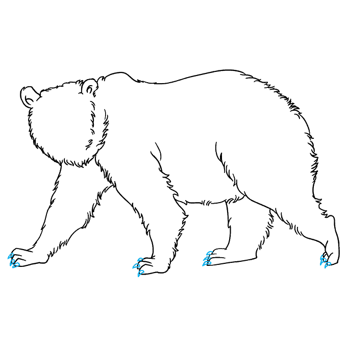 How to Draw Grizzly Bear: Step 7