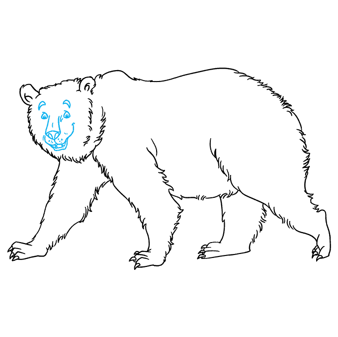 How to Draw Grizzly Bear: Step 8