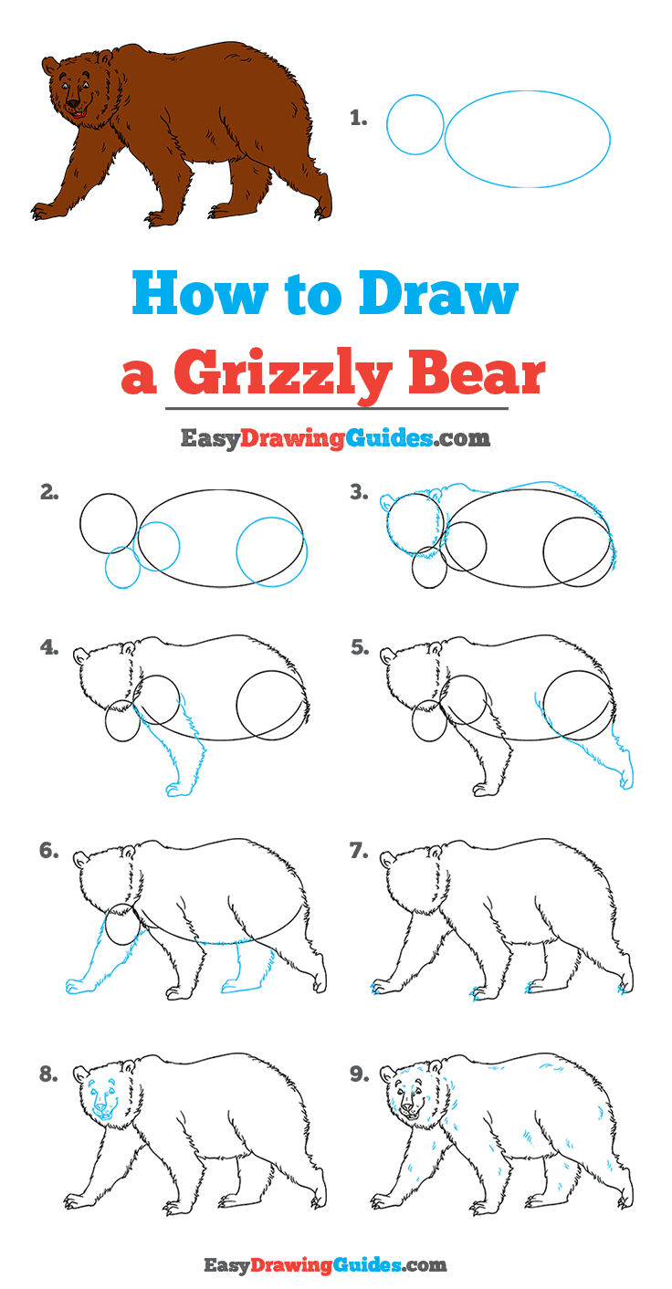 How to Draw Grizzly Bear