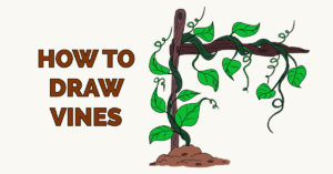 How to Draw Vines Featured Image