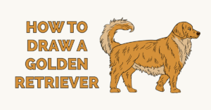 How to Draw a Golden Retriever Featured Image