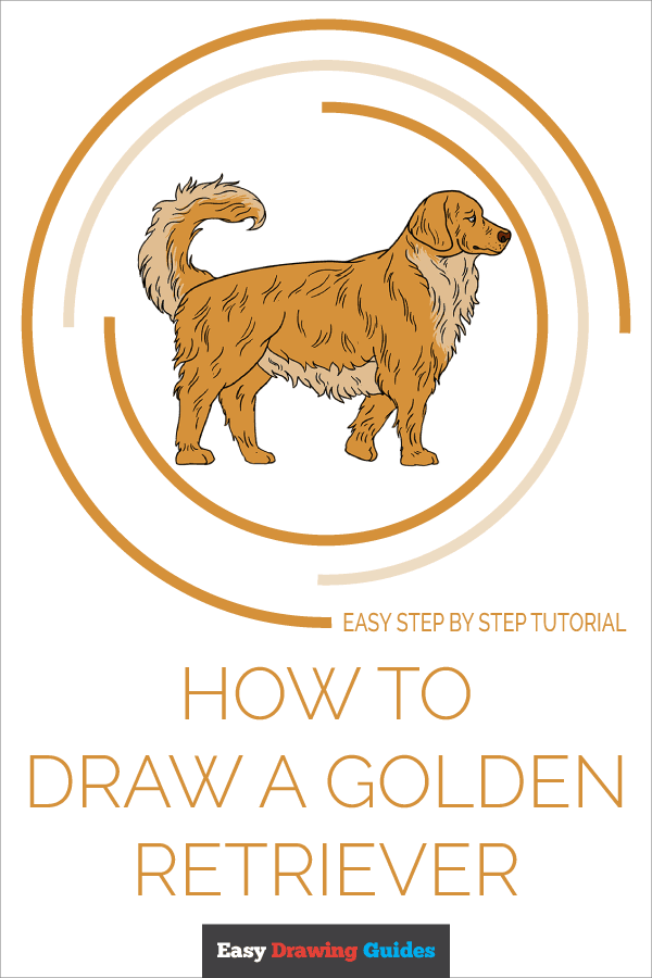 How to Draw a Golden Retriever Pinterest Image