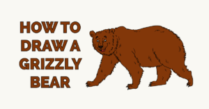 How to Draw a Grizzly Bear Featured Image