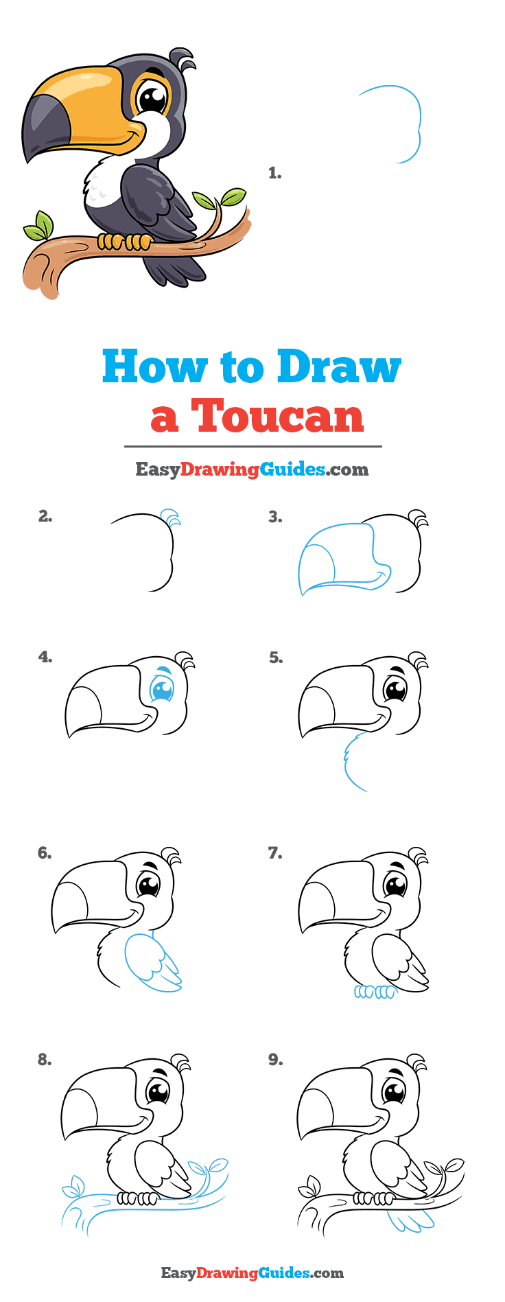 How to Draw Toucan