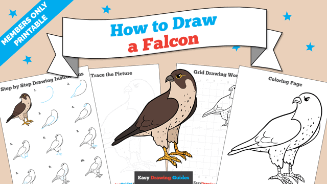 download a printable PDF of Falcon drawing tutorial