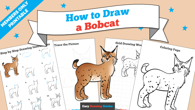 download a printable PDF of Bobcat drawing tutorial