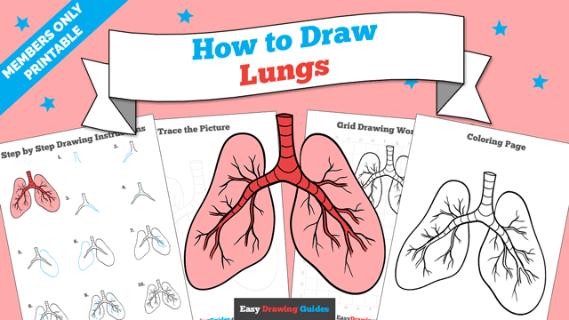 Printables thumbnail: How to draw Lungs