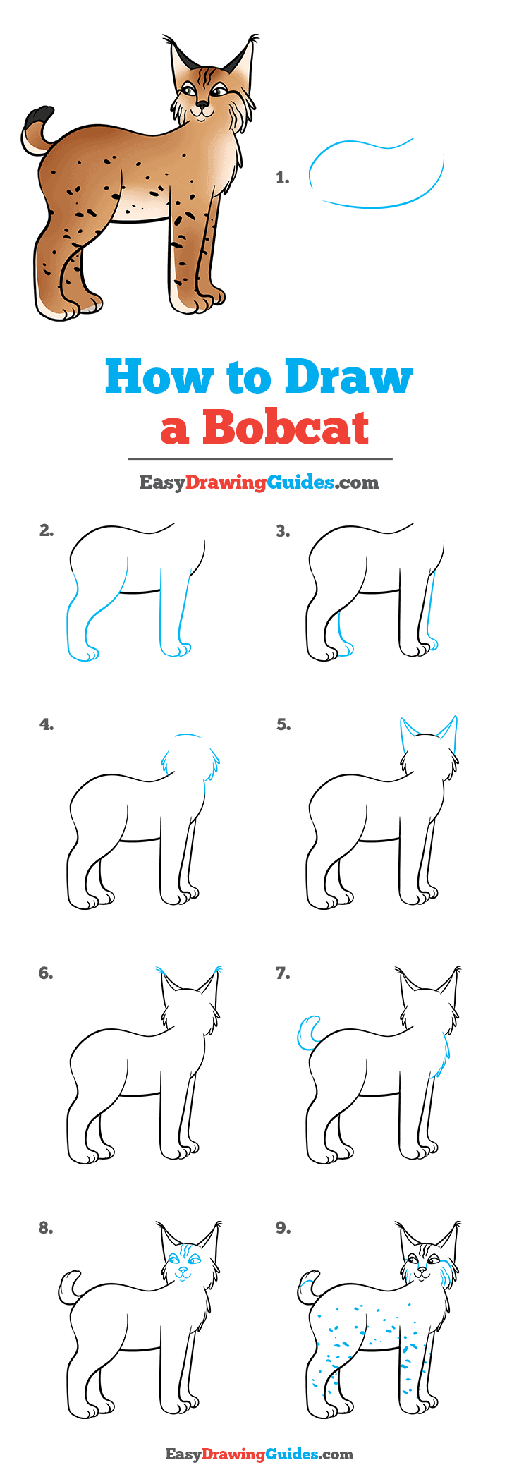 How to Draw Bobcat